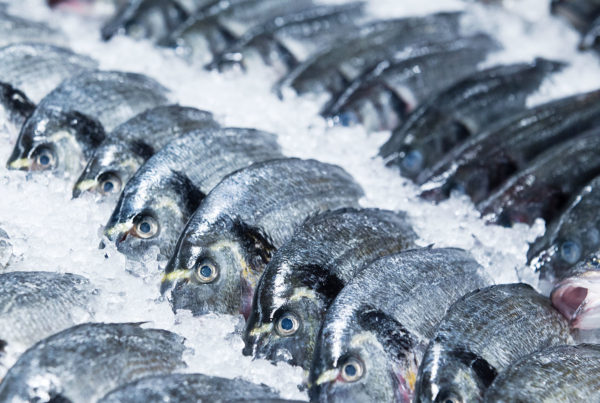 Правила перевозок: как перевозить морепродукты?