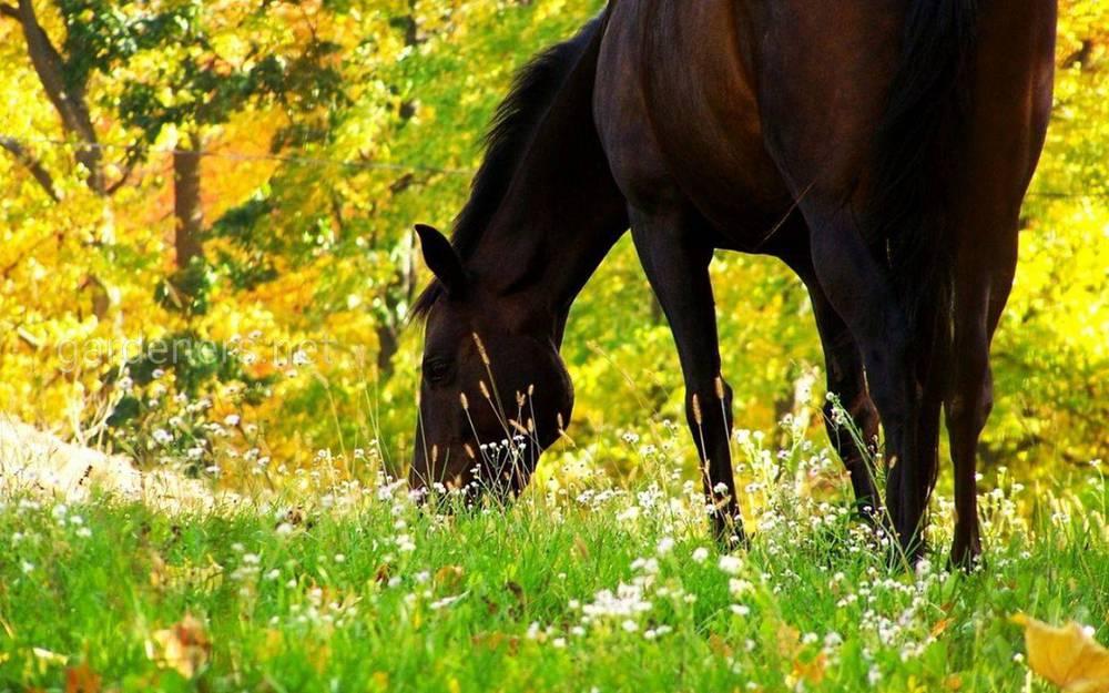 Нюансы транспортировки лошадей: как не навредить животному